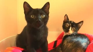 Pet Tales: Adoption fees waived for kittens at Woods Humane Society