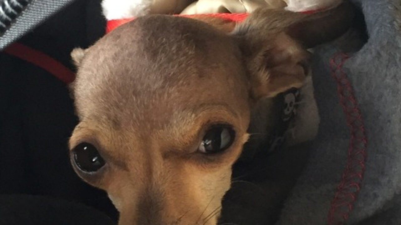 Internet sensation (and dog) missing