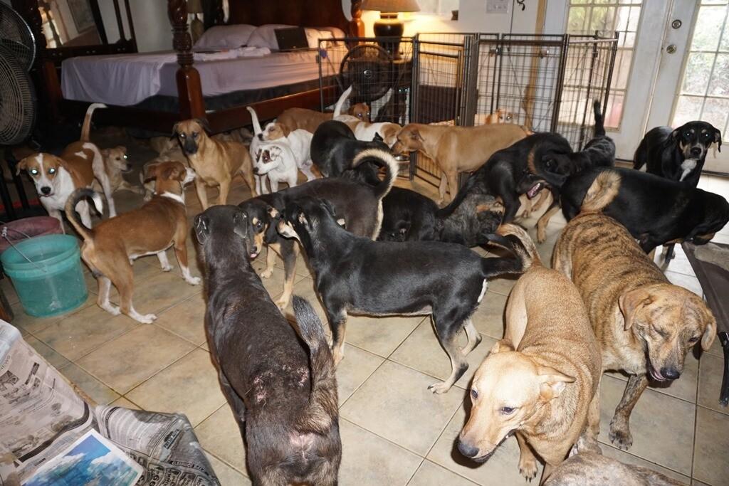 Bahamas dogs 2