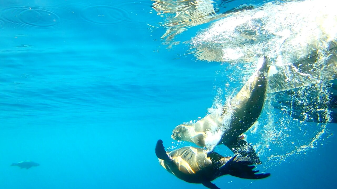 SeaWorld Sea Lion Return - Photo 2 - 1.30.2020.jpg