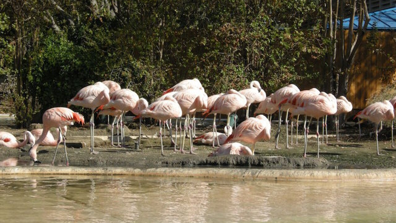 Kids break into a zoo and stone a flamingo to death