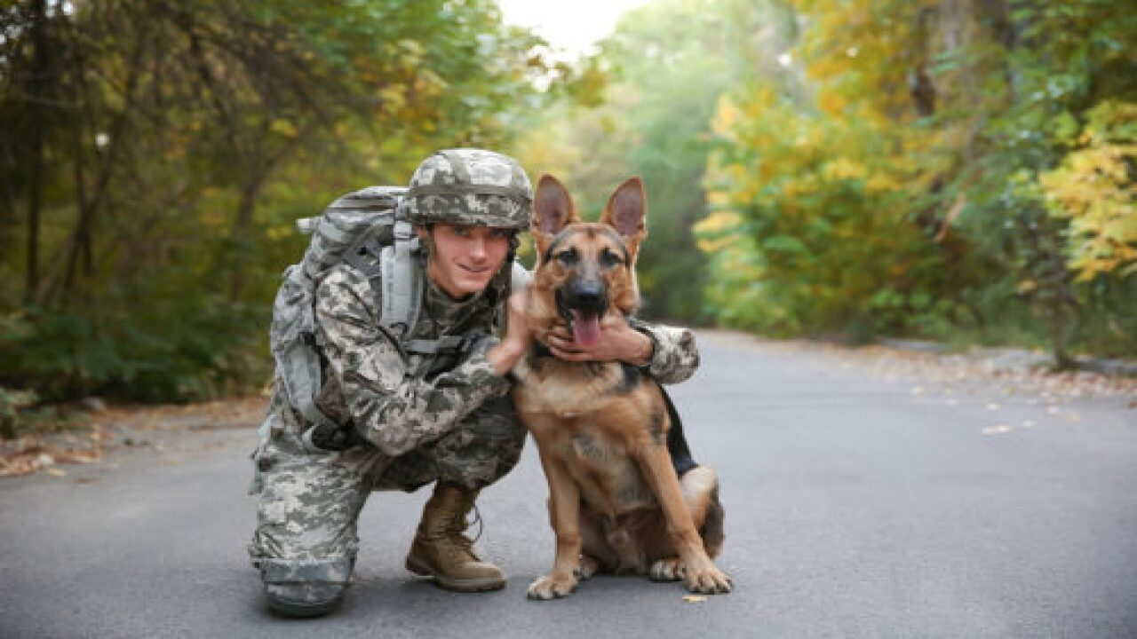 The U.S. Postal Service Is Honoring Military Working Dogs With New Forever Stamps