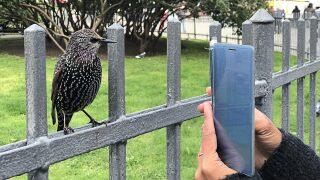 Merlin bird ID app helps you identify birds by their songs