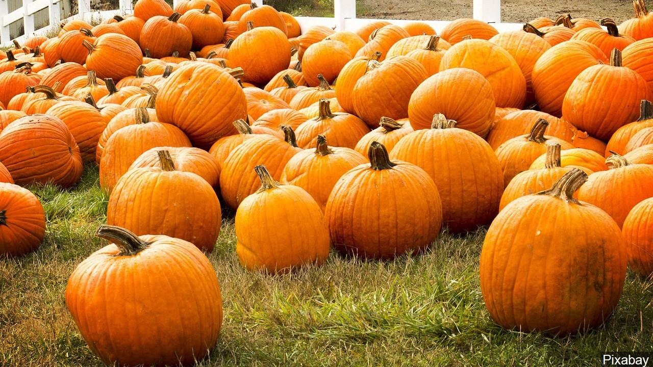 Asbury United Methodist Church pumpkin patch