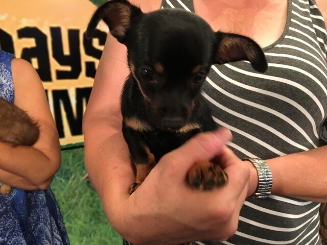 PHOTOS: Find a pet at the Dog Days of Summer event