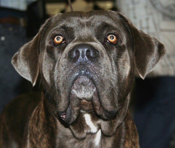See the dog breeds that are illegal in parts of Colorado