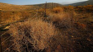 California Wildfires Threaten Biodiversity