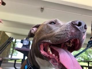 Mack-KCK pit bull ban repealed