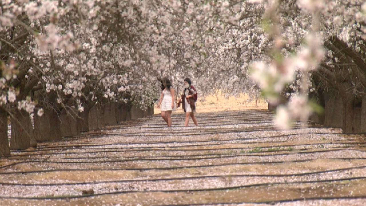 Trespassing in Almond Orchards May Be Disruptive