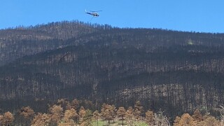 Chopper lifts tree out of Calfire burn zone