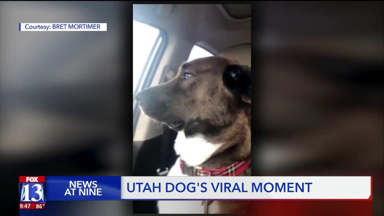 Owner of viral dog 'Fritz' explains whathappened