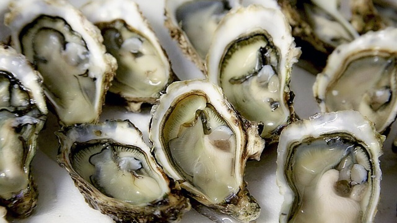 Slurp down oysters on National Oyster Day