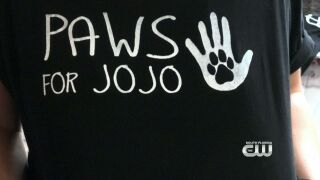 Furry Fix: Paws For Jojo