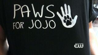 Furry Fix: Paws ForJojo