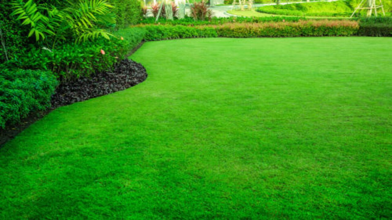 How To Make Grass Green And Lush