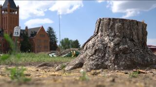 People gather outside Loretto Heights to grieve trees being cut down for development
