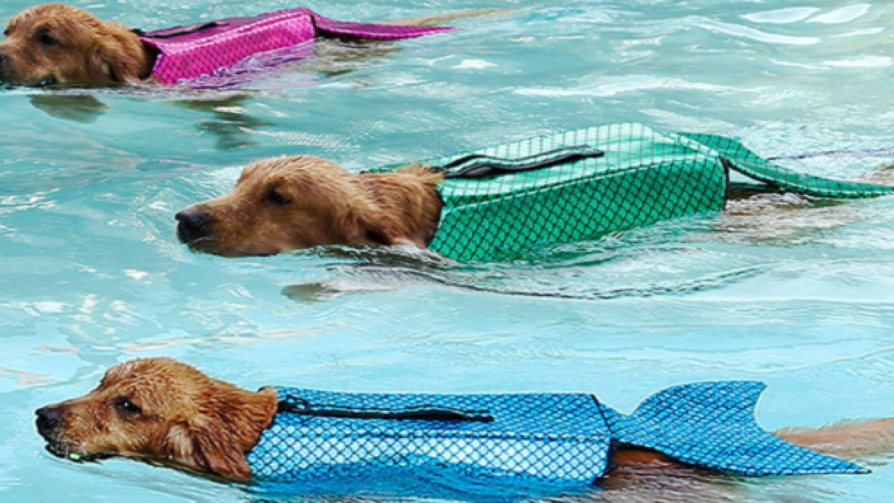 These Mermaid Life Jackets For Dogs Are The Cutest Thing You'll See This Summer