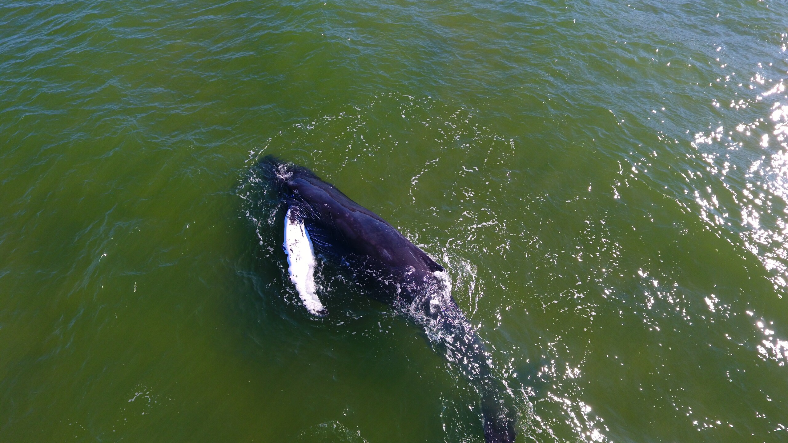 Photos: Dead whale spotted in Chesapeake Bay brought ashore by Virginia Aquarium