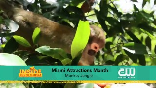 Paws & Claws: Miami Attractions Month