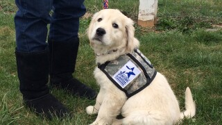 Service dog group for vets gets new ATV