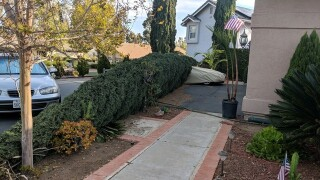 Video: Wind-blown tree crushes car in Escondido during Red Flag Warning