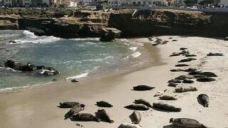 Judge overturns Children's Pool beach access ban