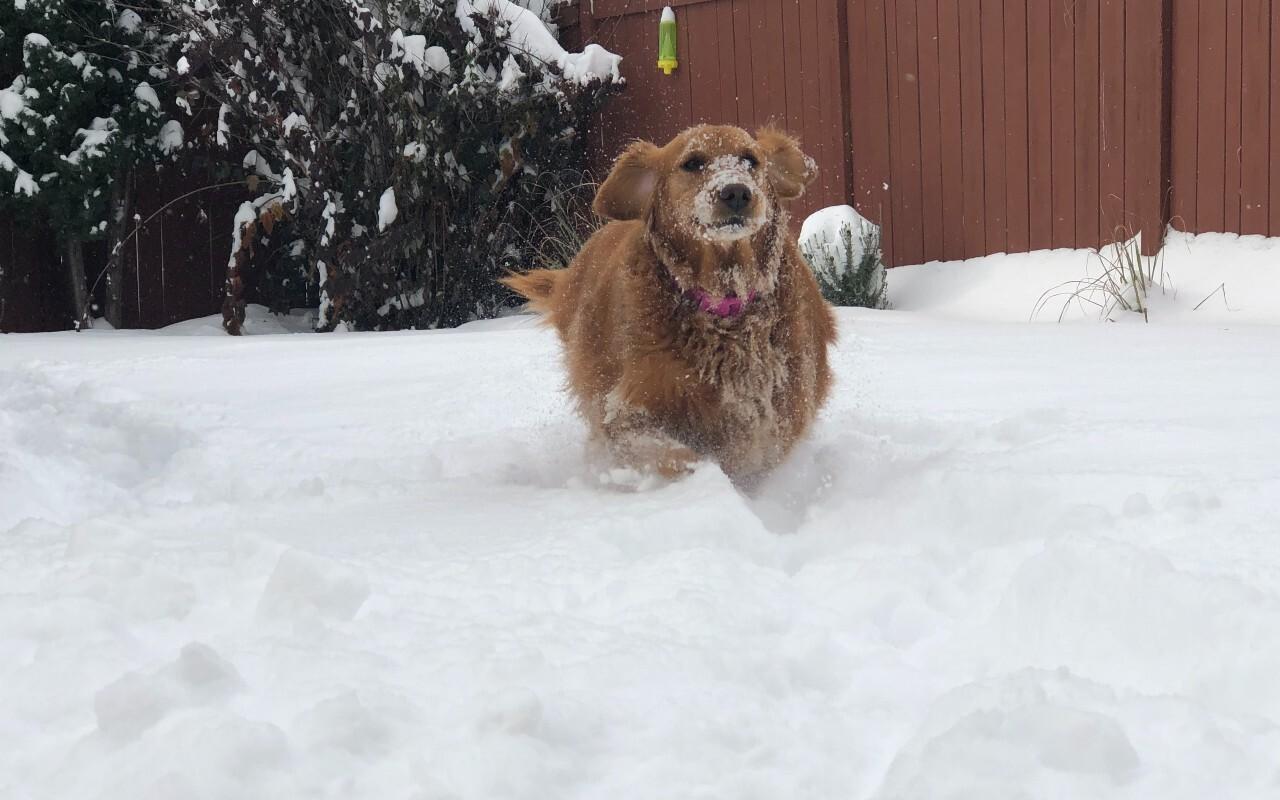 Snow Oct 24 Dog Fun.jpg