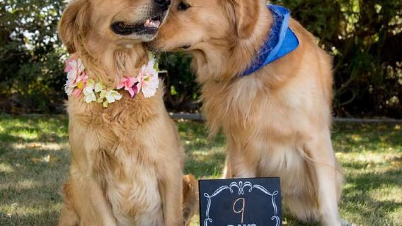 Pregnant dog gets its own maternity photo shoot