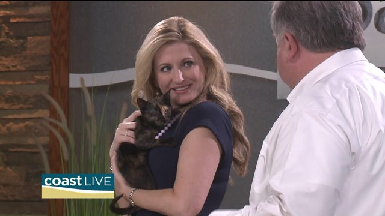 Saving stray cats and how you can help on Coast Live