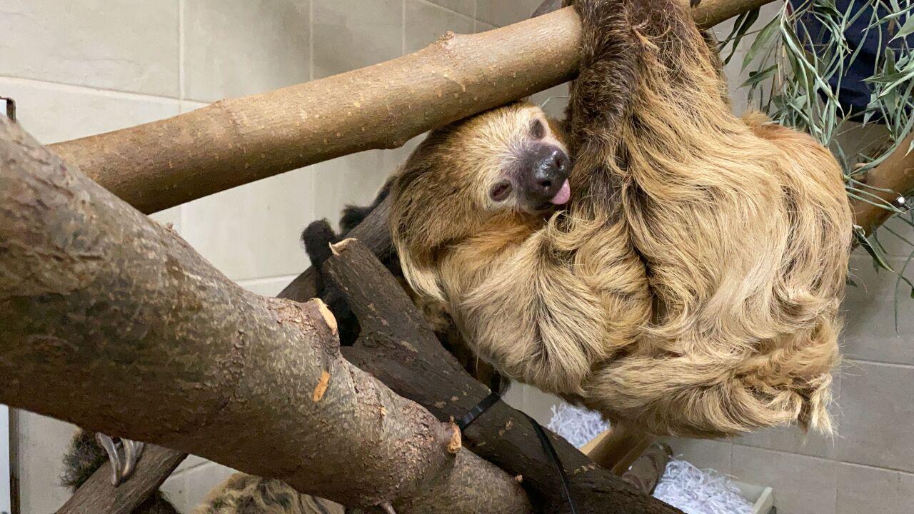 Sloth2.jpeg