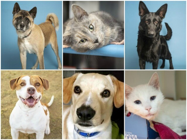 Adoptable pets from Arizona Humane Society and Maricopa County Animal Care (11/28)