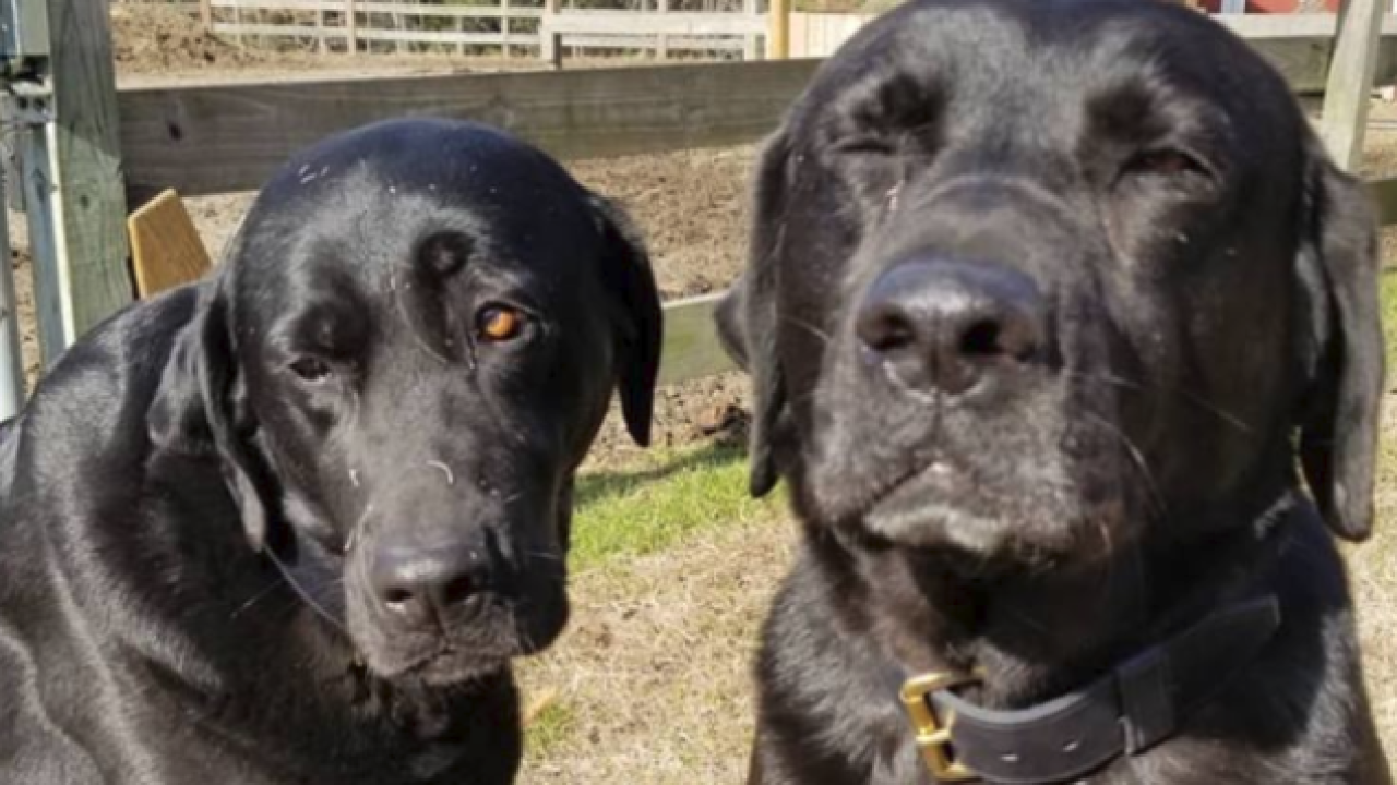 'Sorry, mom:' Local postal worker leaves adorable note after dogs steallunch
