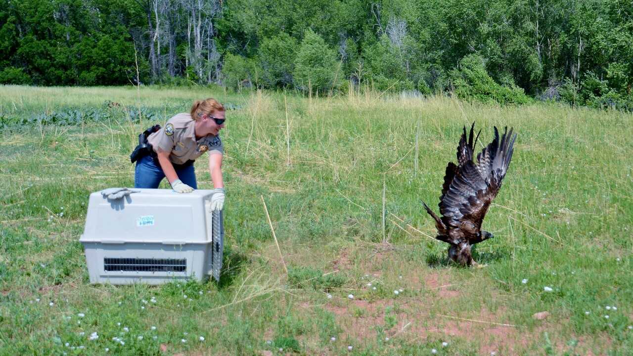 The Raptor Center has been a non-profit in Pueblo for roughly 4o years