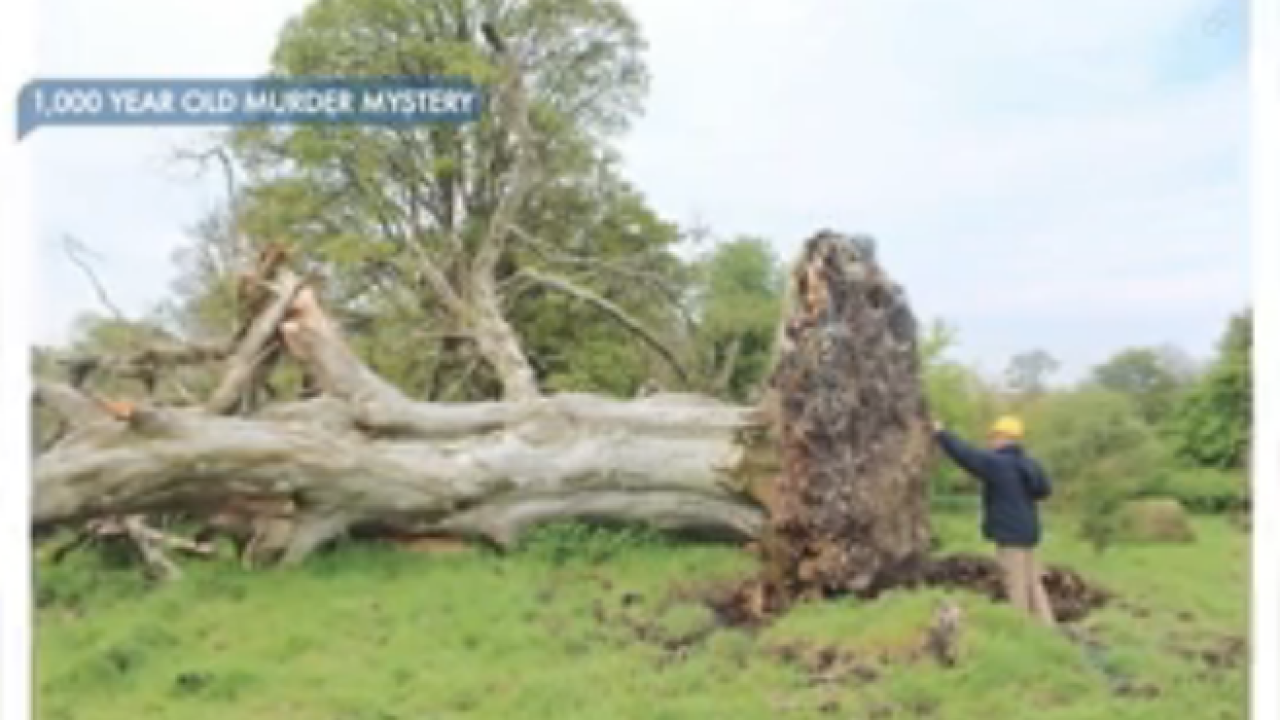 Uprooted tree reveals mysterious, violent death from 1,000 years ago