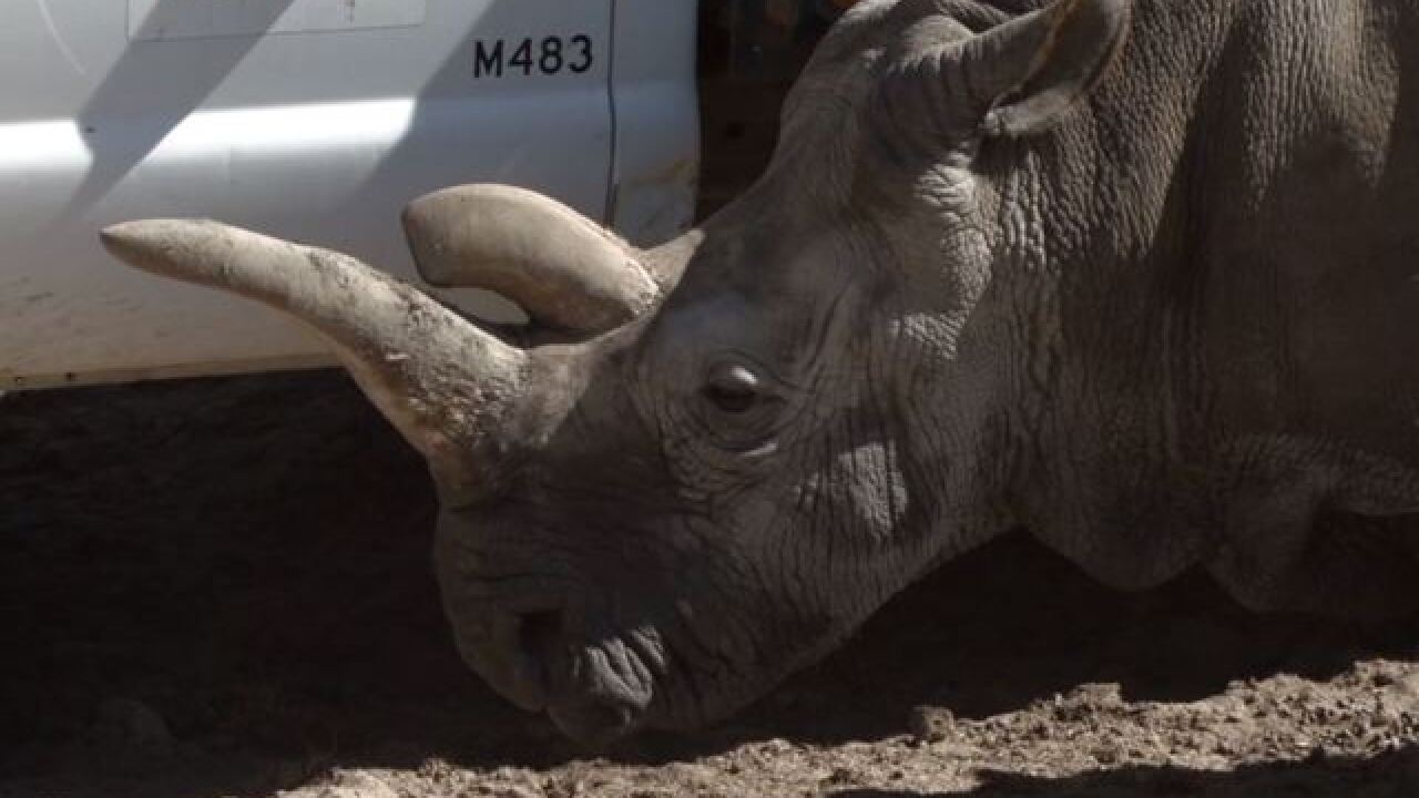 SD Zoo takes major step in saving rhino species