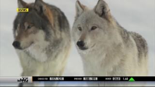 Montana Ag Network report for February 24