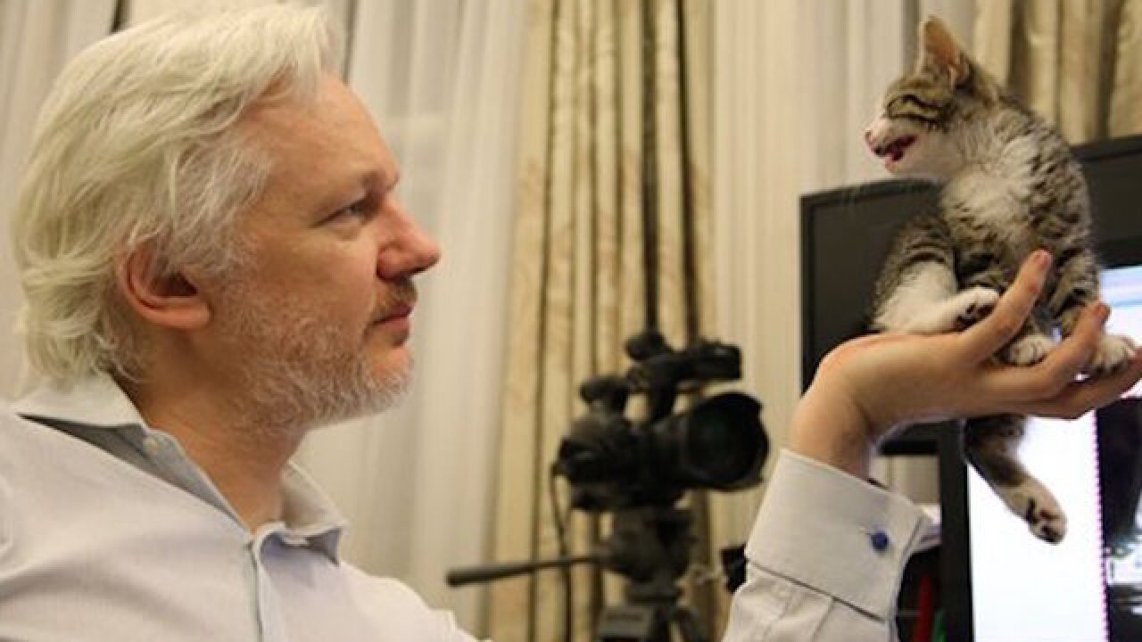 Swedish court denies Assange hearing request