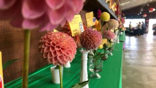 Gardeners among competitors at the California Mid-State Fair