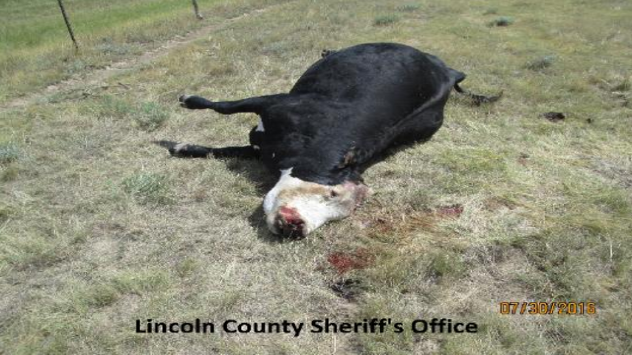 $10,000 reward offered to find cattle killer