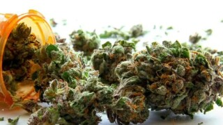 TN Medical Cannabis Trade Association Withdraws Support For Medical Marijuana Bill
