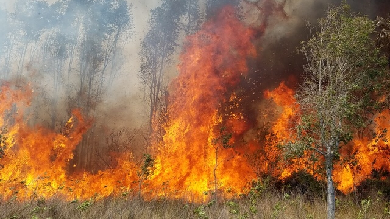 Burn Ban issued for Cape Coral