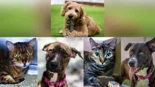 Adoptable-Pets-June-14.png
