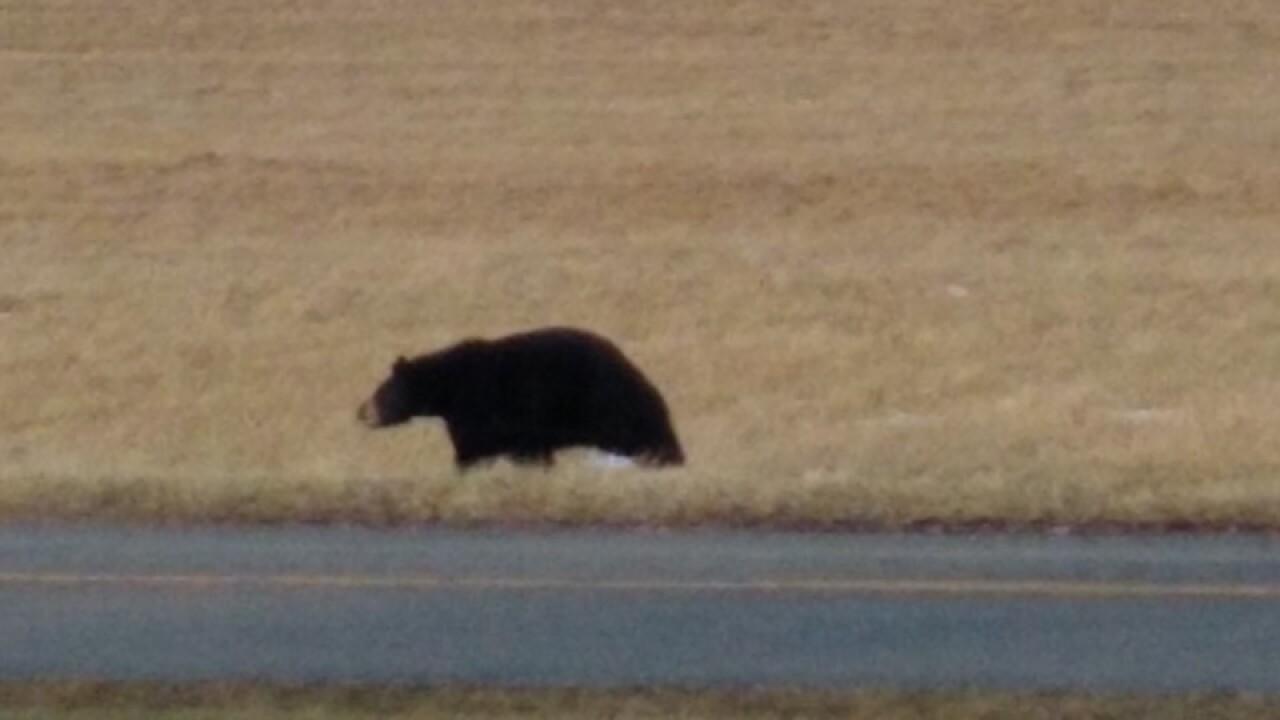 Cranberry Lake Bear 3 - Courtesy Jill Brown via Email.jpg