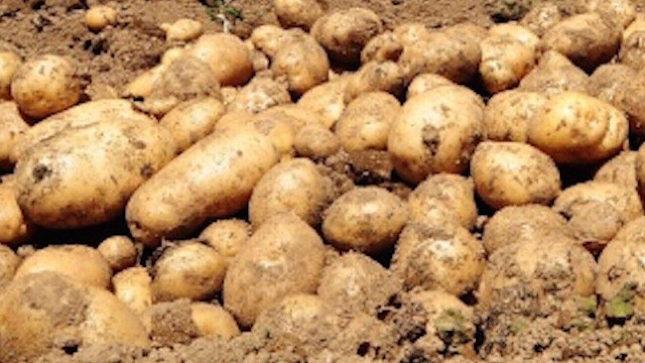 Photograph of potato sells for $1M