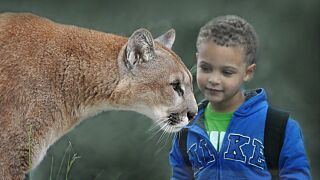 Cincinnati Zoo Stock Photo