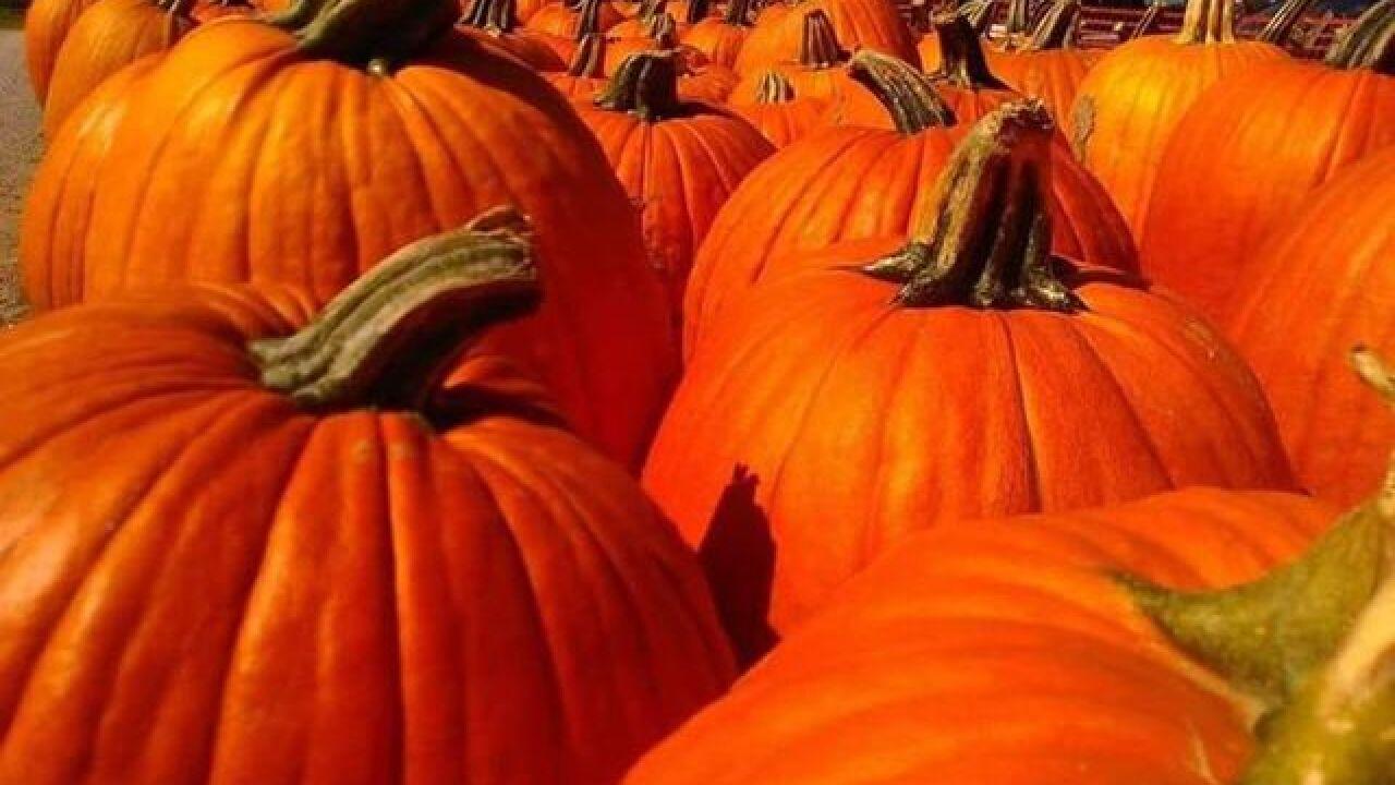 Best pumpkin patches around Northeast Ohio