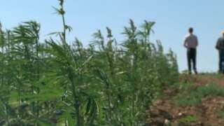 Montana Ag Network: Havre hemp oilseed pressing facility under construction