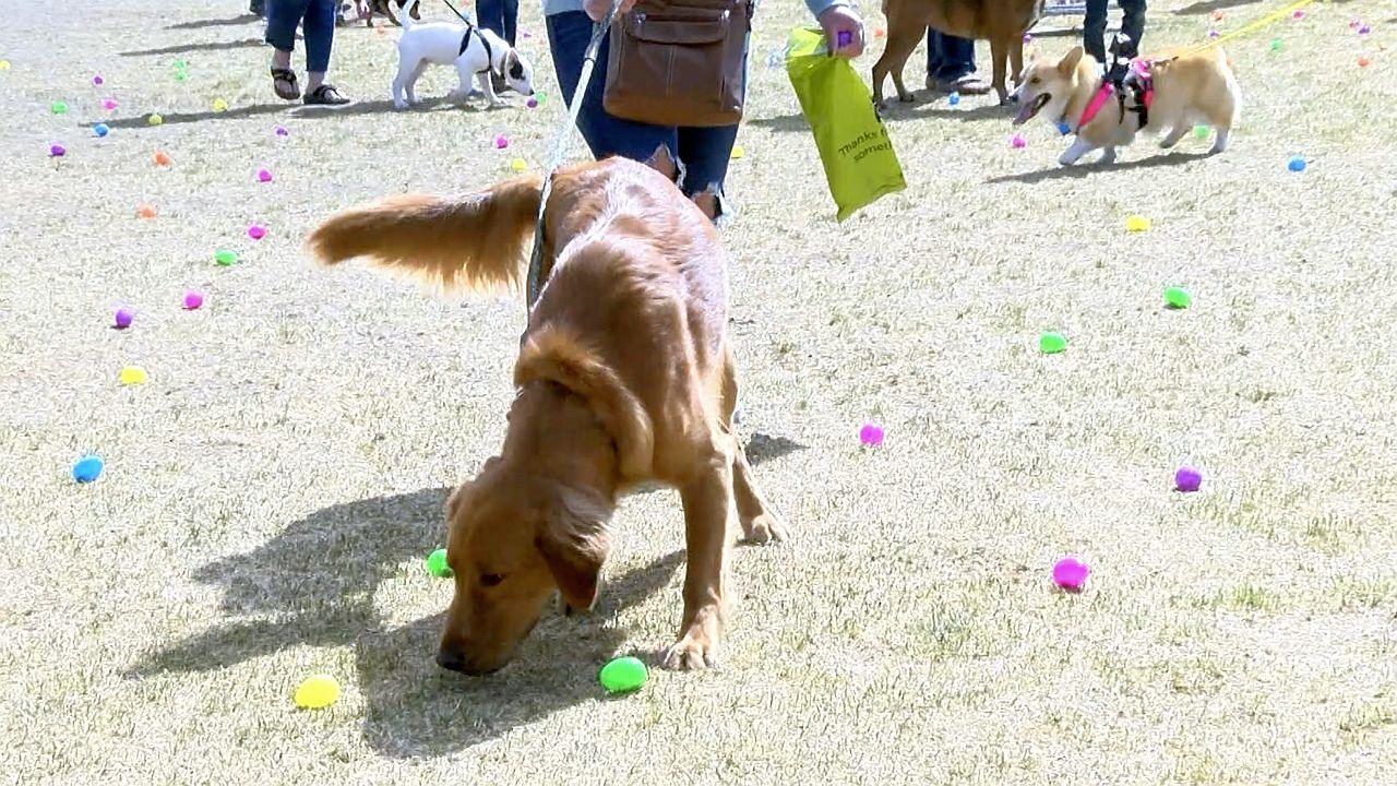 """Dogs enjoy """"Easter Egg Hunt"""" at Fetch"""