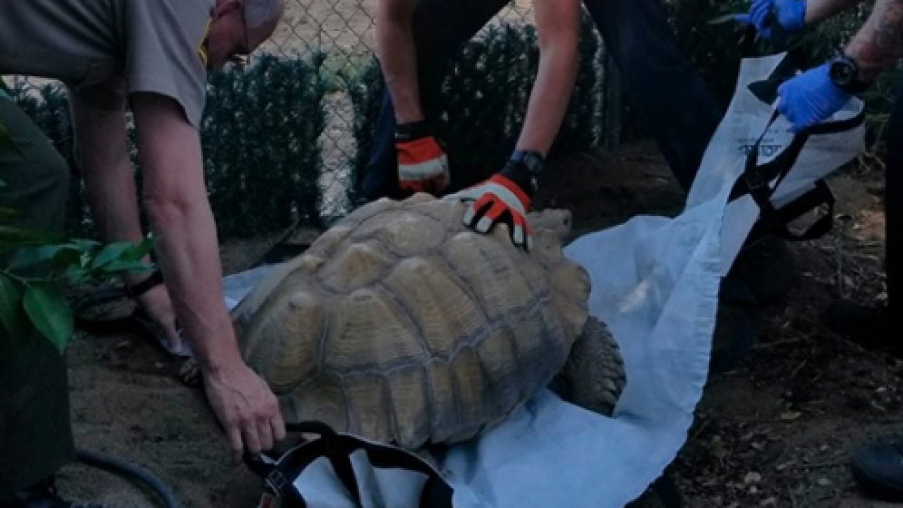 campo tortoise_4.png