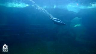kansas city zoo cam